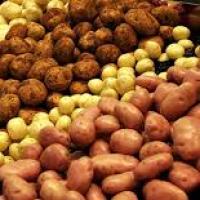 تصدير منتجات مصرية وتسويقها خارجيا