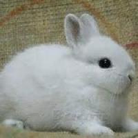 مزرعة-أرانب Picture