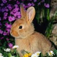 مزرعه-أرانب Picture