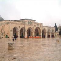 Dalia Elsayed Profile Picture