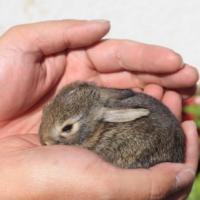 تربية-الأرانب-وبيعها Picture