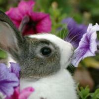 تربية-ارانب Picture