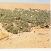 تربية-النعام Picture