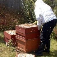 مشروع تربية النحل و إنتاج العسل Project Picture