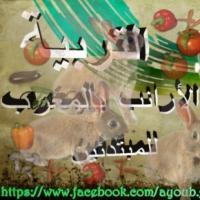 التربية-الارانب-بالمغرب-للمبتدئي Picture