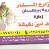مزارع-المنار-للسمان Picture