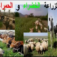 الزراعة-الخضراء-والحمراء Picture