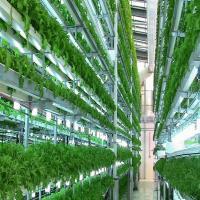 الزراعة-بدون-تربة Picture