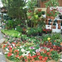 مشتل-نباتات-زينة Picture