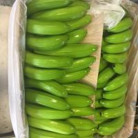 الموز من امريكا الجنوبية Project Picture