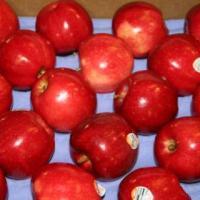 تصدير جميع انواع الفواكه و الخضر Project Picture