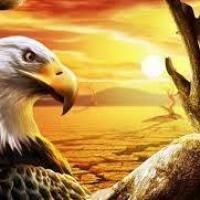 profile-229740 Profile Picture