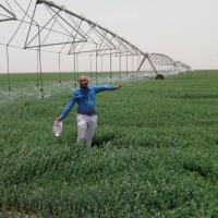 مشروع زراعة وتصدير البرسيم المجف Project Picture