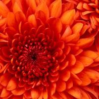 profile-189951 Profile Picture