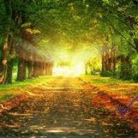 Mbedier Profile Picture