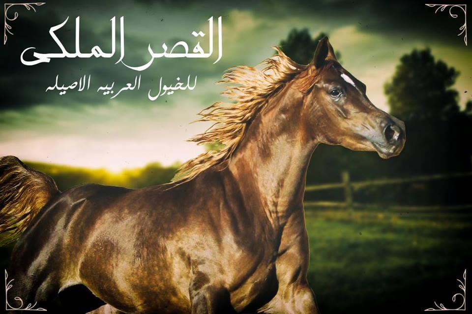 emanmahmoud Profile Picture