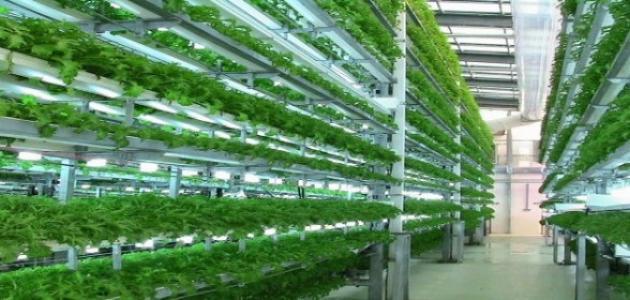الزراعة المائية اكوابونيك Project Picture