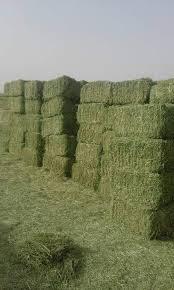 تصدير الاعلاف الزراعية  Project Picture