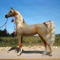 265f525f3 Profile Picture
