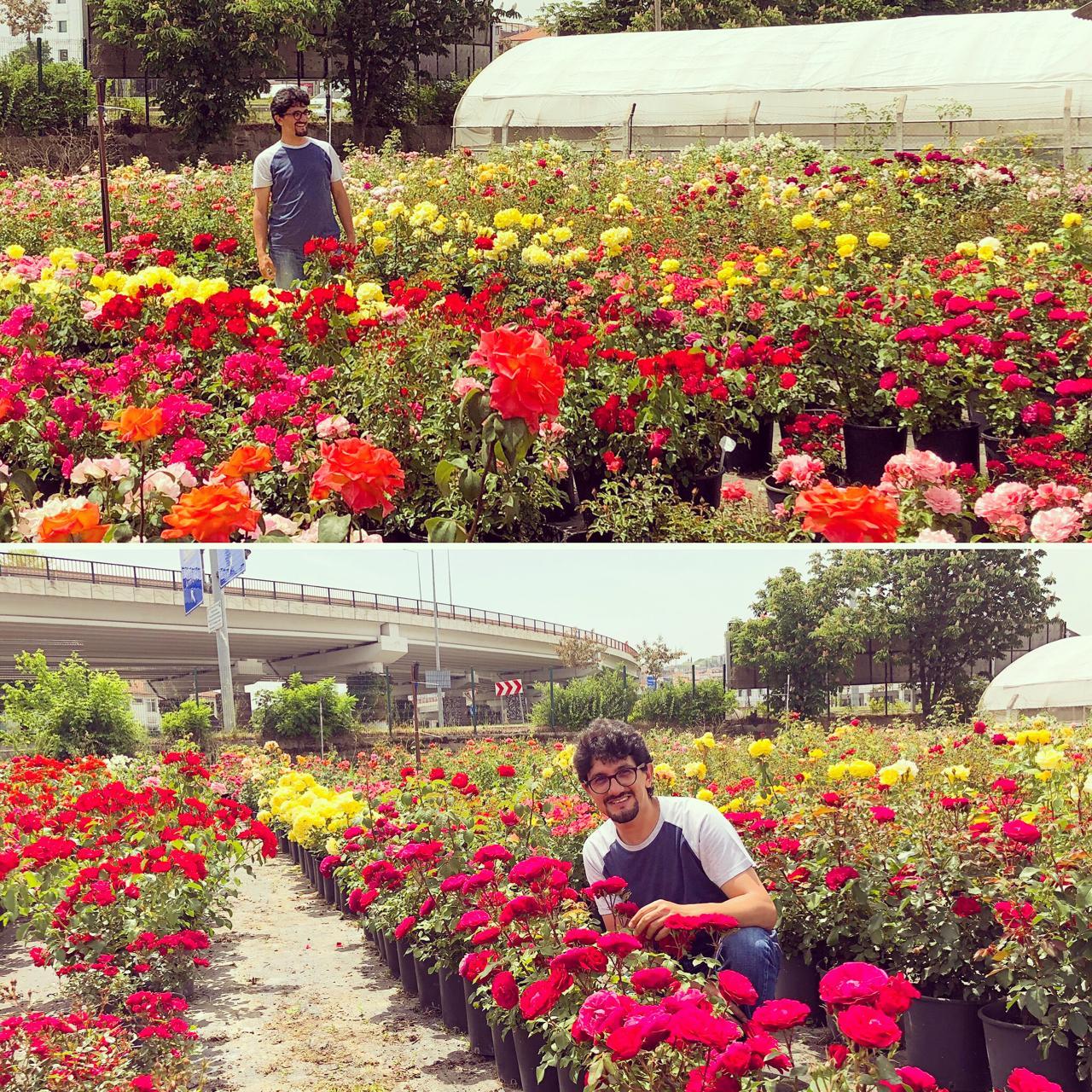 flowersun Profile Picture