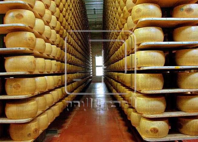 تخزين الجبن الرومى  Cover Image