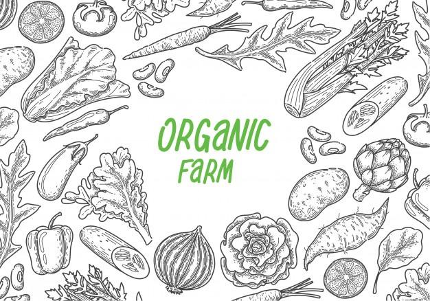 تصدير الخضروات والفواكة وعمل مزرعة دواجن وابقار Cover Image