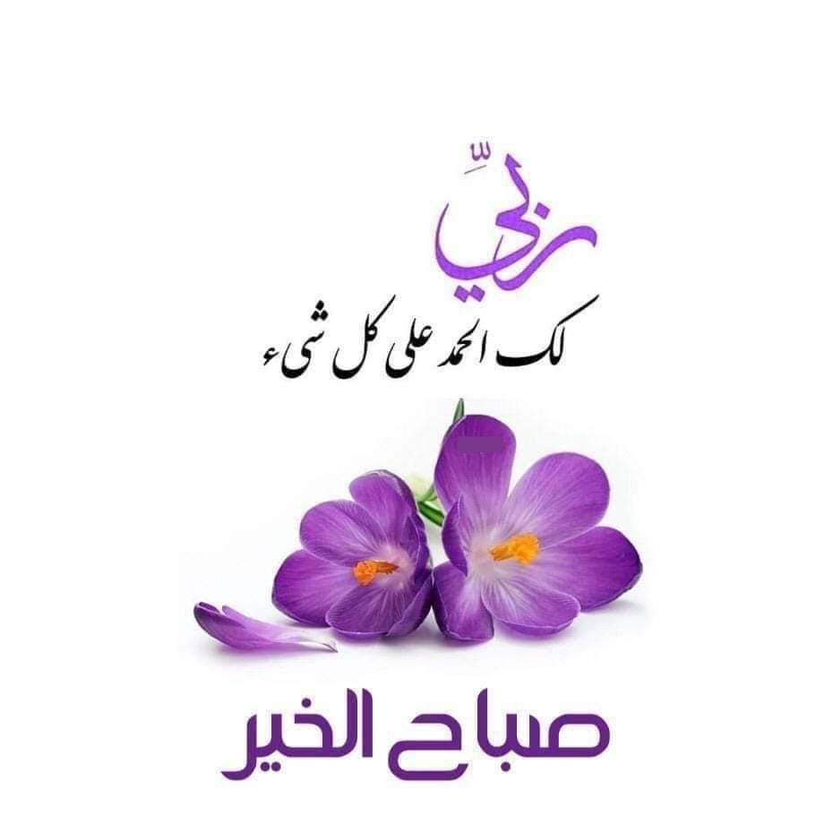 mohamedsamirzidan Profile Picture