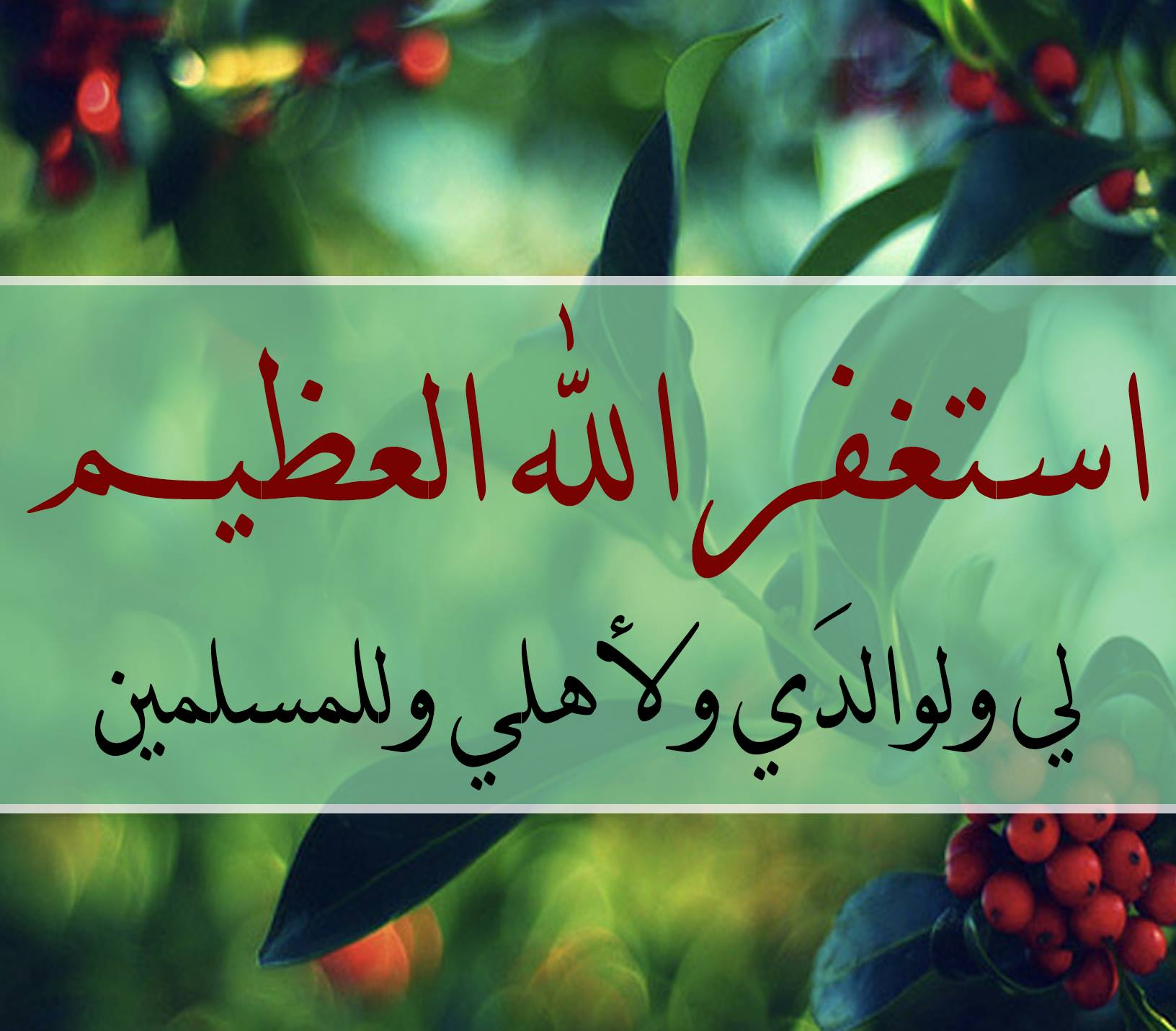mohamedabdelgwad Profile Picture