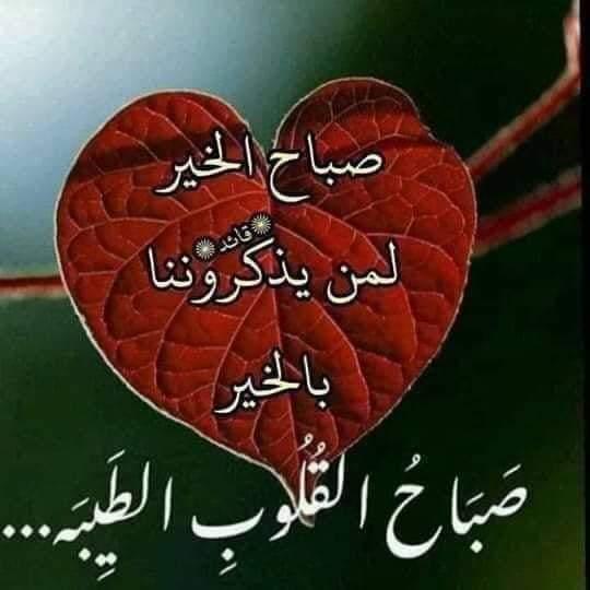 Ameermahmoud Profile Picture