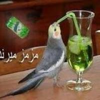 Ahmed Maadi Profile Picture